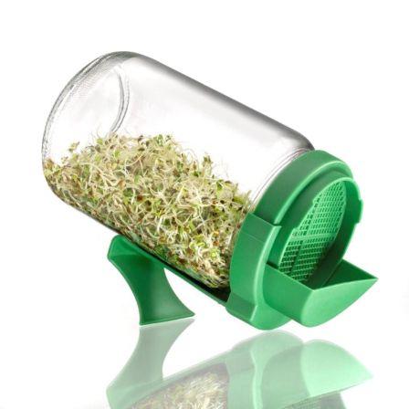Faire germer ses graines : germoir en verre