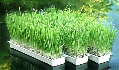 faire germer ses graines : le germoir Easygreen