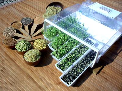 recette aux graines germées : germoir automatique Easygreen