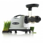 8006S wheatgrass_2000X2000