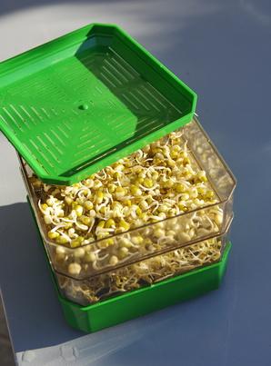 comment faire germer ses graines
